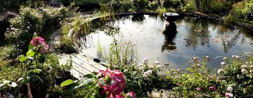 bassin-potager